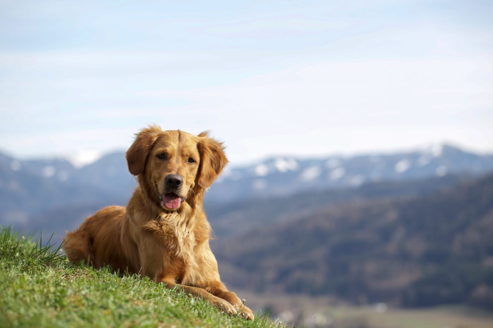 Holidays with dogs – Turrabuel holiday apartments in